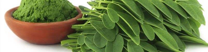 Moringa Leaf Powder Exporters and Suppliers in India