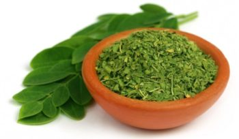 moringa-powder-healthy-green-leaves-dried-cut