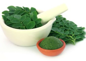 Moringa Exporters from India
