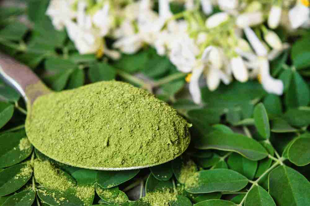 Moringa Powder Suppliers