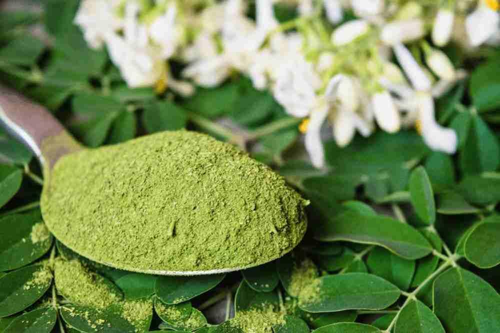 Moringa Powder Suppliers