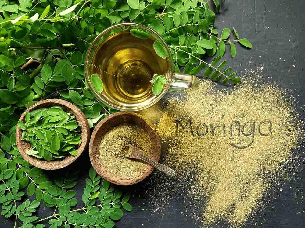 Moringa Powder Exporters