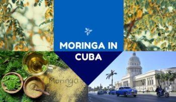 Moringa in Cuba, Moringa Seeds