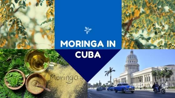 Moringa in Cuba in 2020!