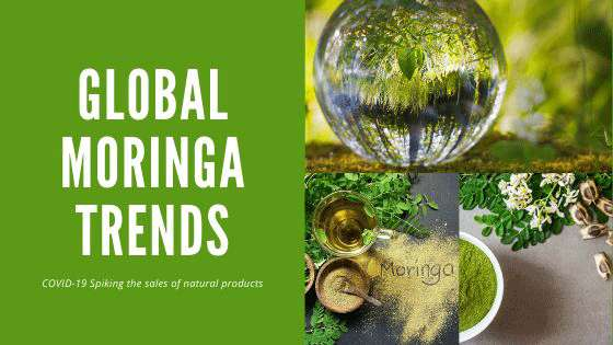 Global Moringa Trends