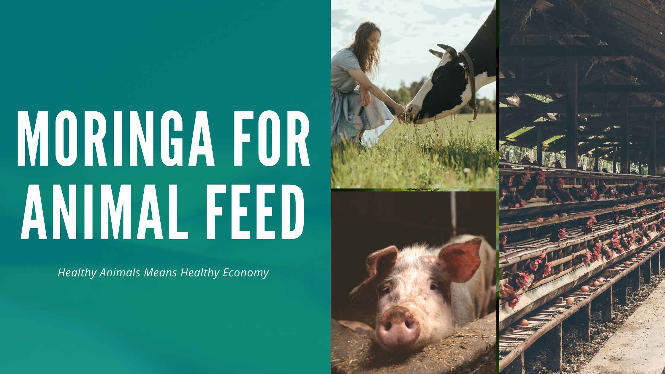 Moringa for Animal Feed – Moringa Pellets