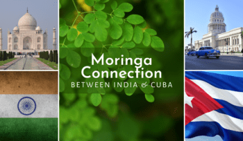 Moringa Connection India & Cuba