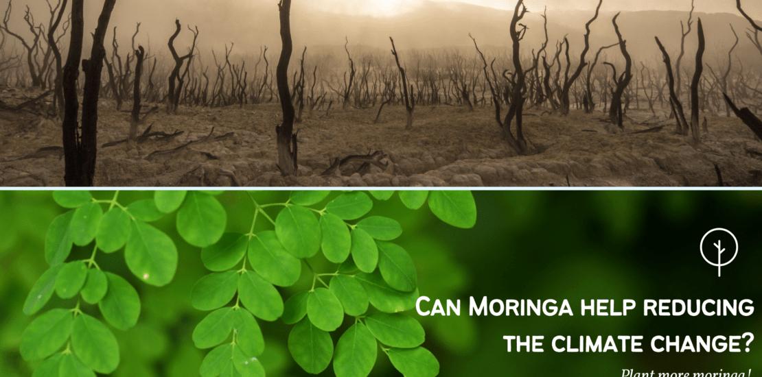 Moringa-Climate-Change-final