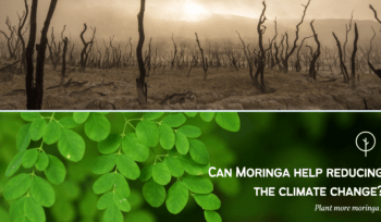 Moringa-Climate-Change-final