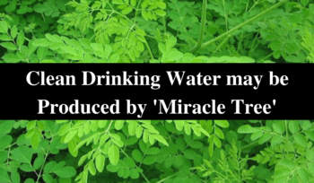 Clean Drinking Water may be Produced by 'Miracle Tree'